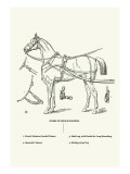 Single Harness Horse Wall Decal by Samuel Sidney