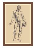 Man Wall Decal by Andreas Vesalius