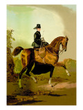 Ladies' Horse Wall Decal by Samuel Sidney