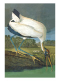 Wood Stork Wall Decal by John James Audubon