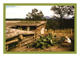 Dugout Home Graden of Jack Whinery in Pie Town Wall Decal by Russell Lee
