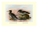 Auckland Island and Brazilian Mergansers Wall Decal by Henrick Gronvold