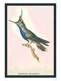 Hummingbird: Trochilus Delandii Wall Decal by Sir William Jardine