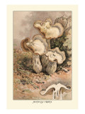 Helvella Crispa Wall Decal by William Hamilton Gibson