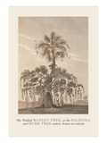 The Banian Tree and Burr Tree, United Wall Decal by Baron De Montalemert
