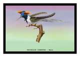 Hummingbird: Male Trochilus Cornutus Wall Decal by Sir William Jardine