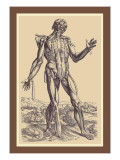The Fifth Plate of the Muscles Wall Decal by Andreas Vesalius