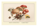 Boletus Subtomentosus and Boletus Chrysenteron Wall Decal by William Hamilton Gibson