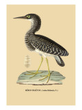 Heron Phaeton Wall Decal