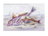 Red Surmullet and Lof Finned Captain Wall Decal by Robert Hamilton