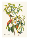 Bachman's Warbler Wall Decal by John James Audubon