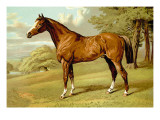 Stilton, A Hunter Wall Decal by Samuel Sidney
