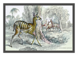 Harnessed Antelope Wall Decal by John Stewart