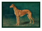 Coursing Greyhound Wall Decal