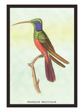 Trochilus Multicolor Wall Decal by Sir William Jardine