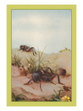 The Field Cricket Wall Decal by Edward Detmold
