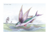 Flying Fish Wall Decal by Robert Hamilton