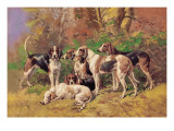 Poitou Hounds Wall Decal by Baron Karl Reille