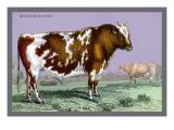 British Short Horn Wall Decal by John Stewart