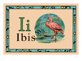 Ibis Wall Decal