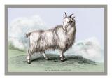 The Wool-Bearing Antelope Wall Decal by John Stewart