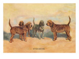 Otter Hounds Wall Decal by Thomas Ivester Llyod