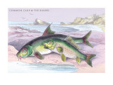 Common Carp and the Barbel Wall Decal by Robert Hamilton