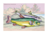 Trench and Gudgeon Wall Decal by Robert Hamilton