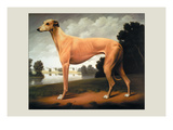 Greyhound on a Parkland Landscape Wall Decal by Christine Merrill