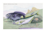 Blackfish and Pilas Fish Wall Decal by Robert Hamilton