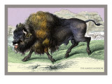 The American Bison Wall Decal by John Stewart