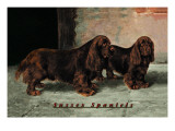 Two Champion Sussex Spaniels Wall Decal