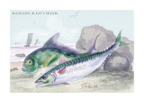 Mackarel and Ray's Bream Wall Decal by Robert Hamilton