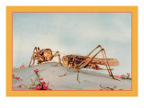 The White-Faced Decticus Wall Decal by Edward Detmold