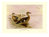 Madagascan Teal Wall Decal by Henrick Gronvold