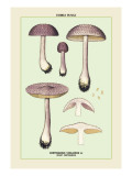 Edible Fungi: Violet Cortinarius Wall Decal