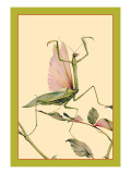 The Praying Mantis Wall Decal by Edward Detmold