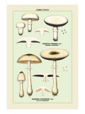 Edible Fungi: Flat-Cap Mushroom Wall Decal