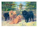 Four Champion Chow-Chows Wall Decal
