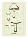 Edible Fungi: Horse Mushroom Wall Decal