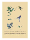 Grenouille Papoue Wall Decal