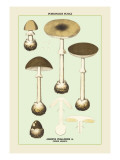 Poisonous Amanita Wall Decal