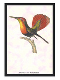 Hummingbird: Trochilus Moschitus Wall Decal by Sir William Jardine