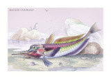 Mailed Gurnard Wall Decal by Robert Hamilton