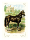 The Horse Wall Decal