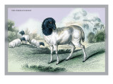 The Persian Sheep Wall Decal by John Stewart