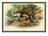 The Fox Wall Decal by Sir William Jardine