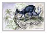 The Cambing Ootan Wall Decal by John Stewart