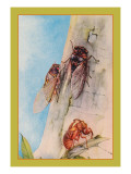 The Cicada Wall Decal by Edward Detmold