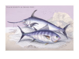 Plain Bonito and Swordfish Wall Decal by Robert Hamilton